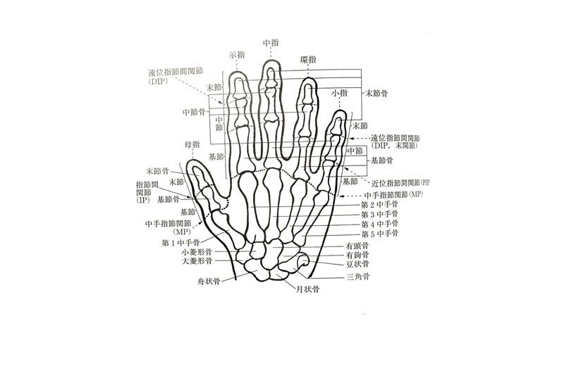 手指の障害